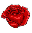red rose bud isolated flower on white background vector image