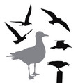 seagull collection vector image