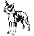 decorative standing portrait of boston terrier vector image