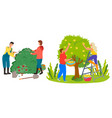 farmers harvesting in garden roses trimming vector image vector image