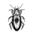 hand drawn beetle water beetles realistic sketch vector image