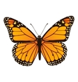 Monarch butterfly Hand drawn vector image