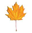 Maple autumn leaf vector image