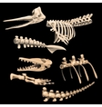 Bones and fragments skeletons of ancient fish vector image