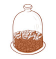 coffee beans in a close jar glass container vector image vector image