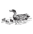 ducks vintage vector image vector image