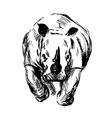 Hand sketch of the running rhino vector image vector image