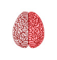 human brain organ realistic model flat design vector image