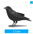 Crow learn birds educational game vector image