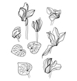 cyclamens pen drawing set vector image vector image