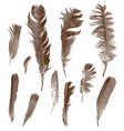 Vintage feathers set vector image vector image