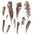 Vintage feathers set vector image