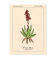 aloe vera medicinal plant hand drawn