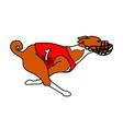 Red and white basenji dog running vector image vector image