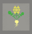 flat shading style plant raphanus vector image