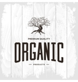 Olive tree vintage logo concept isolated vector image vector image