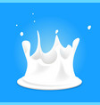 white milk splashes fresh organic drink on blue vector image