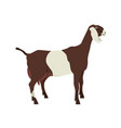 anglo-nubian goat breeds domestic goats flat vector image vector image