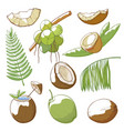 coconuts hand drawn set vector image vector image