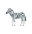flat zebra on white background vector image