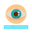 normal conjunctiva healthy eye pupil and iris vector image