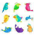 set colorful exotic and tropical parrot cute vector image vector image