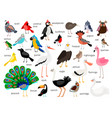 european and asian bird set vector image vector image