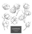 cotton sketch branch collection vector image vector image