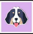 doggie face of bernese mountain dog flat design vector image vector image