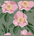 pink peonies with green leaves vector image vector image