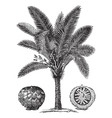 Sago Palm sketch vector image vector image