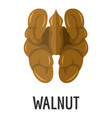 walnut icon flat style vector image vector image