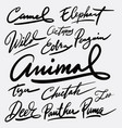 wild animal and camel hand written typography vector image vector image
