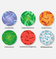 bacterial flora in circle set isolated vector image vector image