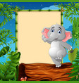 cartoon elephant standing on hollow log near the e vector image vector image