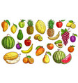 fruits sketch orange apple food and papaya vector image