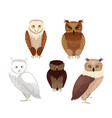 realistic owls set vector image vector image