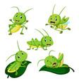 set collection grasshopper cartoon vector image vector image