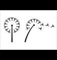 dandelion flower styling vector image