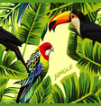 jungle with toucan parrot banana leaves vector image vector image
