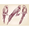 parrot set isolated hand drawn illustration vector image vector image