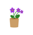 violet flower in a pot flat icon indoor plant vector image vector image