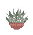 zebra cactus or haworthia attenuata plant on vector image