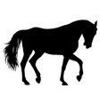 animal silhouette of black mustang horse vector image vector image