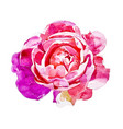 bright pink rose isolated on white background vector image vector image