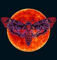 death head hawkmoth on full red moon vector image
