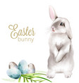 easter watercolor bunny with colorful eggs and vector image vector image
