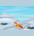 fox cartoon in winter hunting a prey vector image vector image