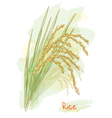 rice watercolor style vector image vector image