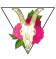 goat skull occult symbol vector image